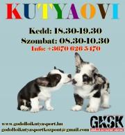 KUTYAOVI