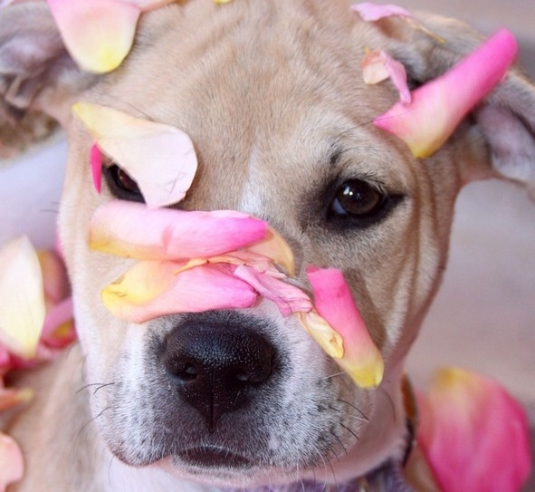 dog-with-pink-roses-e14232281524731-1440x1324